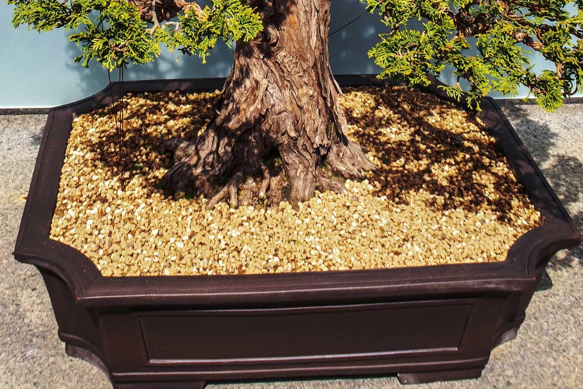 Akadama soil in a binsai tree pot.