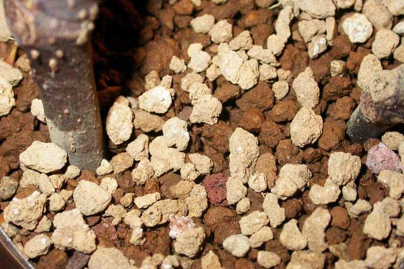 Watered akadama bonsai soil (light and dark brown).